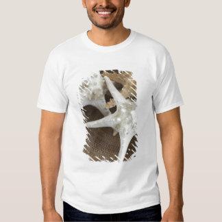 Starfish in a basket tee shirt