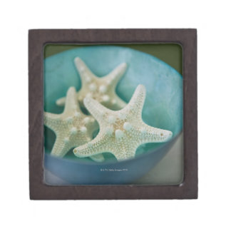 Starfish in bowl gift box