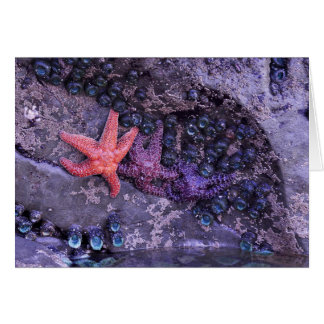 Starfish in Multiple Colors at Ruby Beach, WA Card