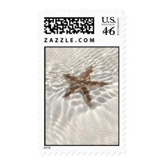 Starfish in paradise stamp