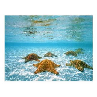starfish island.jpg postcard