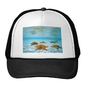 starfish island.jpg trucker hat