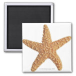 Starfish isolated on white 2 inch square magnet