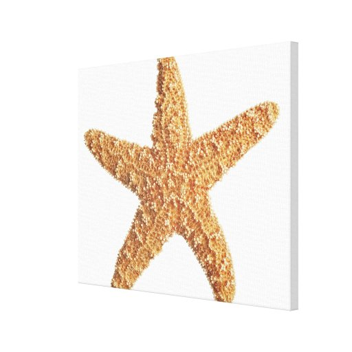Starfish isolated on white canvas print