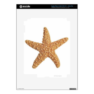 Starfish isolated on white iPad 3 decals