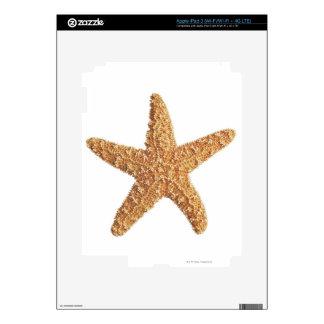 Starfish isolated on white iPad 3 decals