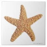 Starfish isolated on white large square tile