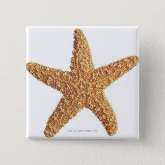 Starfish isolated on white pinback button