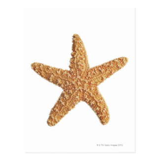 Starfish isolated on white postcard