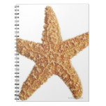 Starfish isolated on white spiral notebook