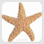 Starfish isolated on white square sticker