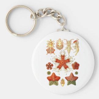 Starfish Key Chains
