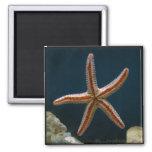 Starfish Love Magnet