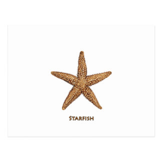 Starfish - Northern Sea Star Postcard