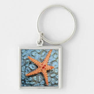 Starfish On A Coral With Polips Keychain