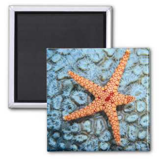 Starfish On A Coral With Polips Magnet