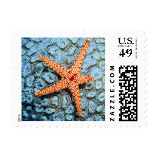 Starfish On A Coral With Polips Postage Stamp