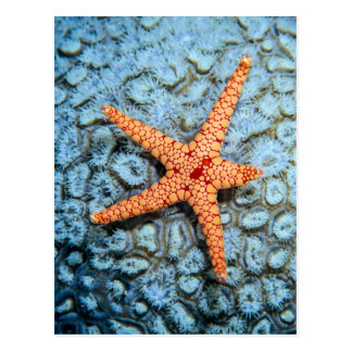 Starfish On A Coral With Polips Postcard
