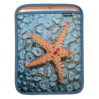 Starfish On A Coral With Polips Sleeve For iPads