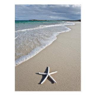 Starfish On A Remote Beach Postcard