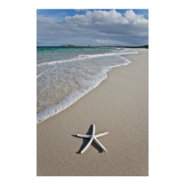 Beach Themed Starfish On A Remote Beach Poster
