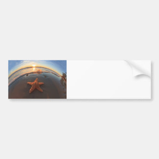 Starfish on Beach at Sunset Car Bumper Sticker
