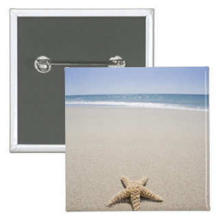 Starfish on beach by Atlantic Ocean Pinback Button