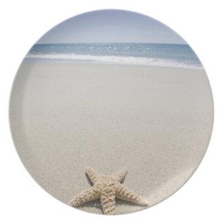 Starfish on beach by Atlantic Ocean Melamine Plate