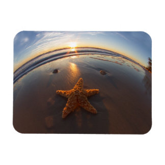 Starfish on Beach Magnet