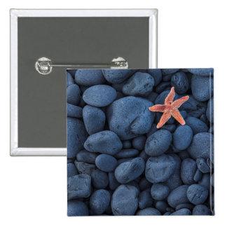 Starfish On Black Rocks Along The Coast | Iceland Button
