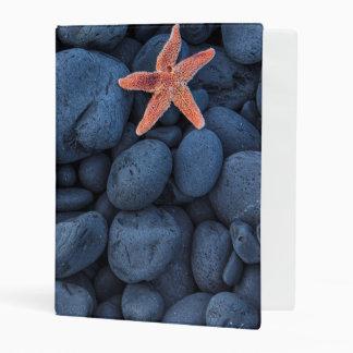 Starfish On Black Rocks Along The Coast   Iceland Mini Binder