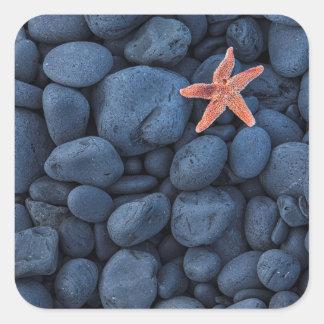 Starfish On Black Rocks Along The Coast | Iceland Square Sticker