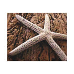 Starfish on Driftwood Gallery Wrapped Canvas