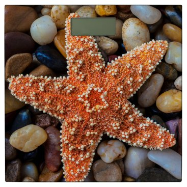 USA Themed Starfish On Rocks Bathroom Scale