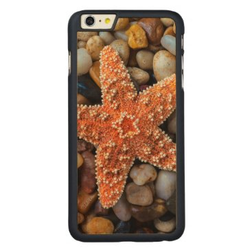 USA Themed Starfish On Rocks Carved Maple iPhone 6 Plus Slim Case