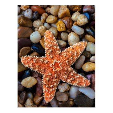USA Themed Starfish On Rocks Postcard