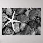 Starfish on Rocks Poster