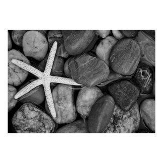 Starfish on Rocks Poster