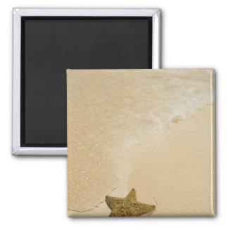 Starfish on sandy beach, Gibbs Cay Land and Magnet