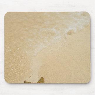 Starfish on sandy beach, Gibbs Cay Land and Mouse Pad