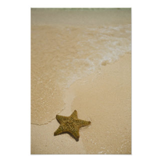 Starfish on sandy beach, Gibbs Cay Land and Poster
