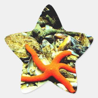 Starfish on Star Star Sticker