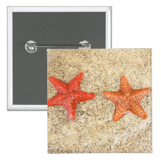 starfish on the beach, at the edge of the ocean button
