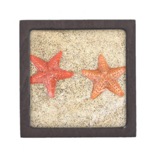 starfish on the beach, at the edge of the ocean gift box