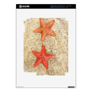 starfish on the beach, at the edge of the ocean iPad 3 decals