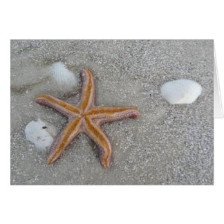 Starfish on the Beach, Marco Island, Florida, 2010 Card