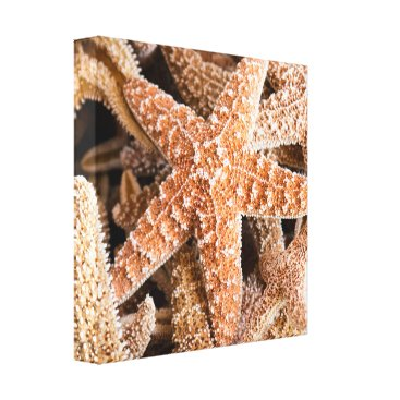 Beach Themed Starfish on the Beach Wrapped Canvas