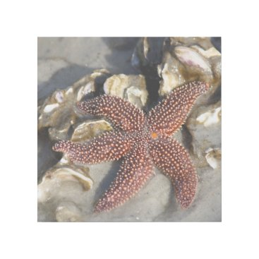 Beach Themed Starfish Photo Print