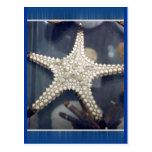 Starfish Post Card