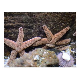 Starfish postcard sea creature